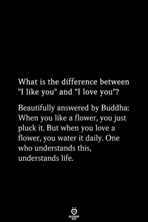 """Life, Love, and I Love You: What is the difference between  """"I like you"""" and """"I love you""""?  Beautifully answered by Buddha:  When you like a flower, you just  pluck it. But when you love a  flower, you water it daily. One  who understands this,  understands life.  RELATIONSHIP  ES"""