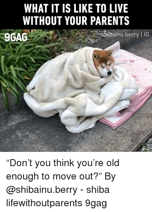 """9gag, Memes, and Parents: WHAT IT IS LIKE TO LIVE  WITHOUT YOUR PARENTS  9GAG  bai  inu.berry  IG """"Don't you think you're old enough to move out?"""" By @shibainu.berry - shiba lifewithoutparents 9gag"""