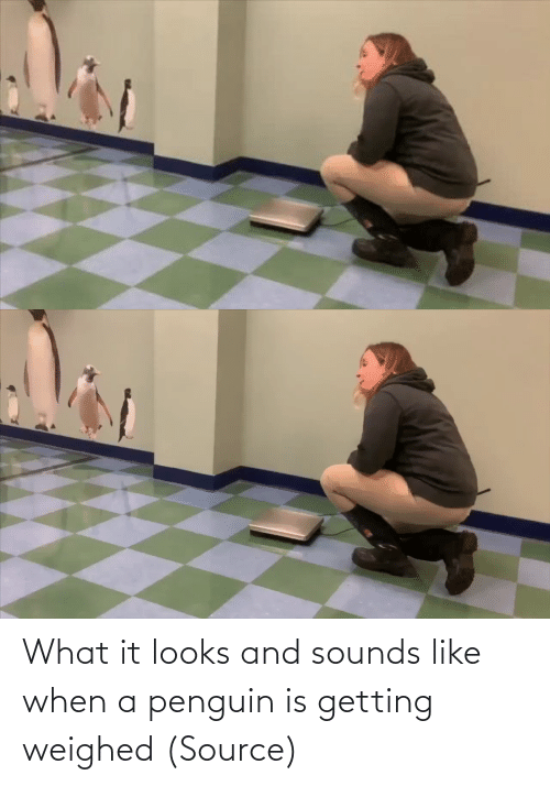 When: What it looks and sounds like when a penguin is getting weighed (Source)