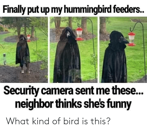 Is This: What kind of bird is this?