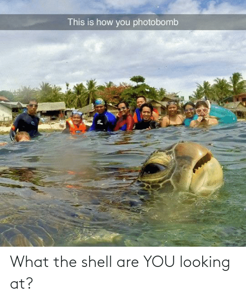 Are: What the shell are YOU looking at?