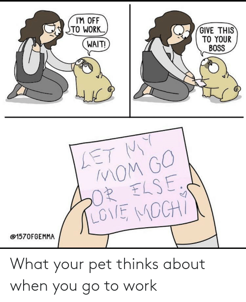 Work: What your pet thinks about when you go to work