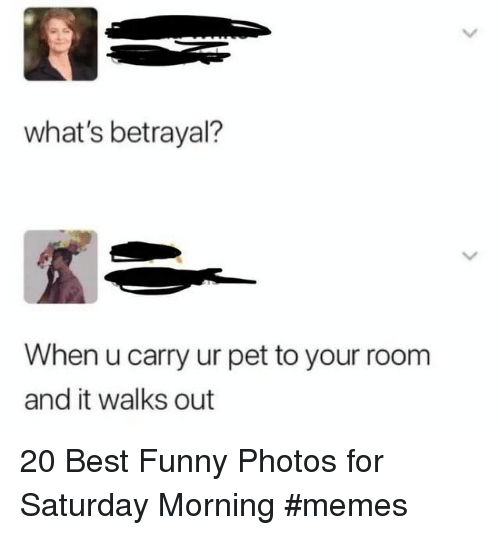 Funny, Memes, and Best: what's betrayal?  When u carry ur pet to your room  and it walks out 20 Best Funny Photos for Saturday Morning #memes