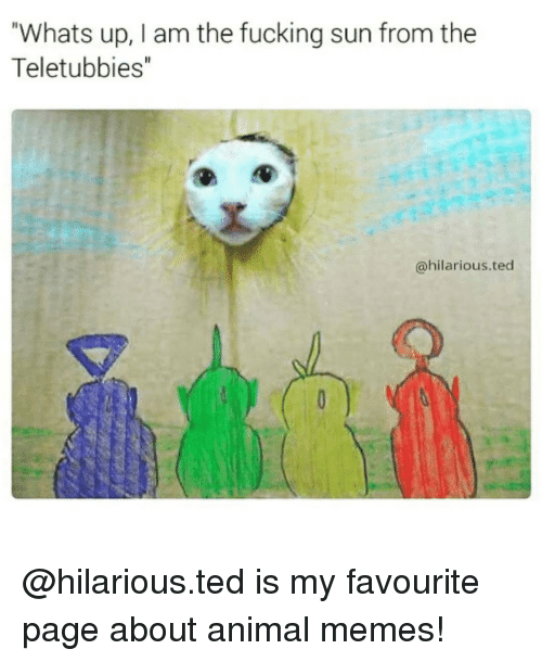 """Animation Meme: Whats up, I am the fucking sun from the  Teletubbies""""  @hilarious ted @hilarious.ted is my favourite page about animal memes!"""