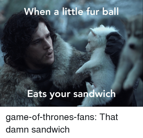Game of Thrones, Tumblr, and Blog: When a little fur ball  Eats your sandwich game-of-thrones-fans:  That damn sandwich