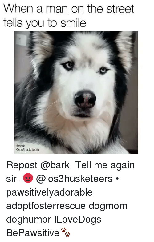 Tell Me Again: When a man on the street  tells you to smile  @bark  @os3huskateers Repost @bark ・・・ Tell me again sir. 😡 @los3husketeers • pawsitivelyadorable adoptfosterrescue dogmom doghumor ILoveDogs BePawsitive🐾
