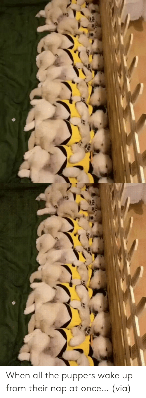 All The: When all the puppers wake up from their nap at once…(via)
