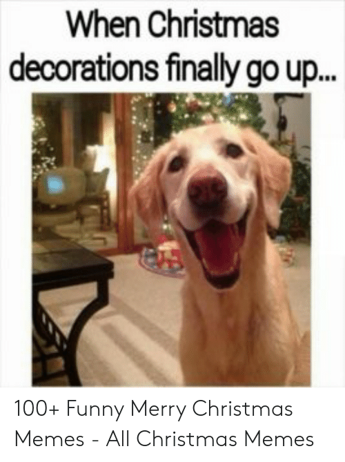 Christmas, Funny, and Memes: When Christmas  decorations finally go up... 100+ Funny Merry Christmas Memes - All Christmas Memes