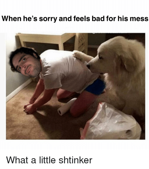 Bad, Memes, and Sorry: When he's sorry and feels bad for his mess What a little shtinker