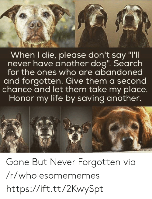 """Second Chance: When I die, please don't say """"I'll  never have another dog"""". Search  for the ones who are abandoned  and forgotten. Give them a second  chance and let them take my place.  Honor my life by saving another. Gone But Never Forgotten via /r/wholesomememes https://ift.tt/2KwySpt"""