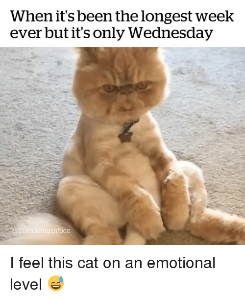 Its Only Wednesday: When it's been the longest week  ever but it's only Wednesday  ace I feel this cat on an emotional level 😅