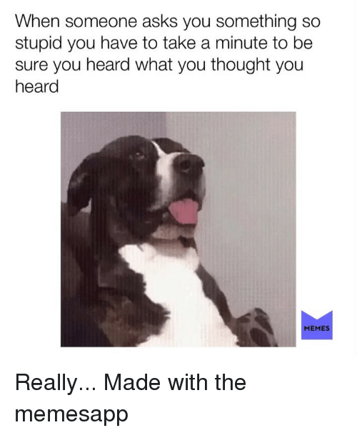 Memes, Thought, and Asks: When someone asks you something so  stupid you have to take a minute to be  sure you heard what you thought you  heard  MEMES Really... Made with the memesapp