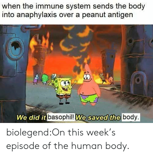Target, Tumblr, and Blog: when the immune system sends the body  into anaphylaxis over a peanut antigen  We did it basophil!l We saved the body. biolegend:On this week's episode of the human body.
