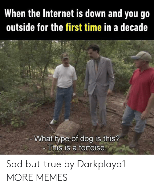 Dank, Internet, and Memes: When the Internet is down and you go  outside for the first time in a decade  What type of dog is this?  This is a tortoise. Sad but true by Darkplaya1 MORE MEMES