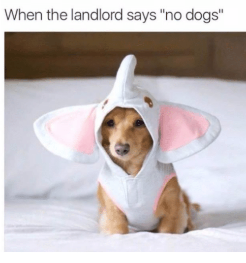 """Dogs,  No, and  Landlord: When the landlord says """"no dogs"""""""