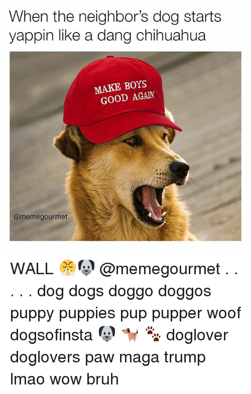 woofing: When the neighbor's dog starts  yappin like a dang chihuahua  MAKE BOYS  GOOD AGAIN  @meme gourmet WALL 😤🐶 @memegourmet . . . . . dog dogs doggo doggos puppy puppies pup pupper woof dogsofinsta 🐶 🐕 🐾 doglover doglovers paw maga trump lmao wow bruh