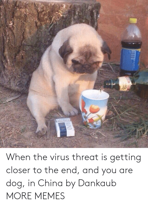 China: When the virus threat is getting closer to the end, and you are dog, in China by Dankaub MORE MEMES