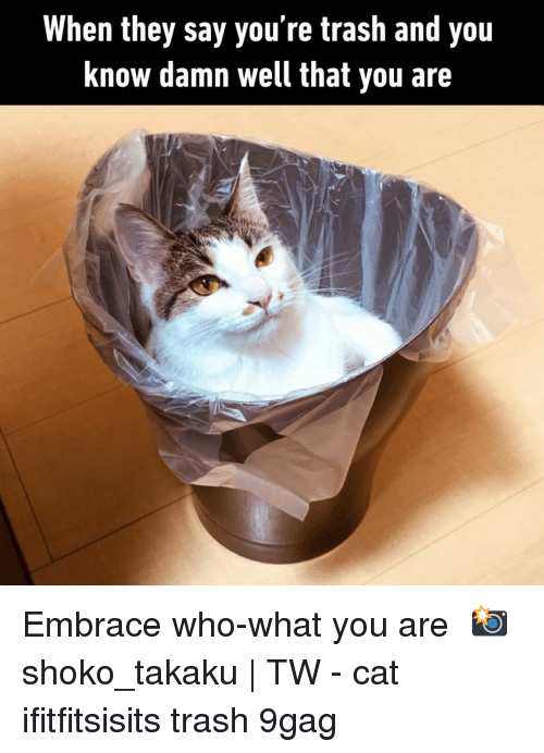 9gag, Memes, and Trash: When they say you're trash and you  Know damn well that you are Embrace who-what you are⠀ 📸 shoko_takaku | TW⠀ -⠀ cat ifitfitsisits trash 9gag
