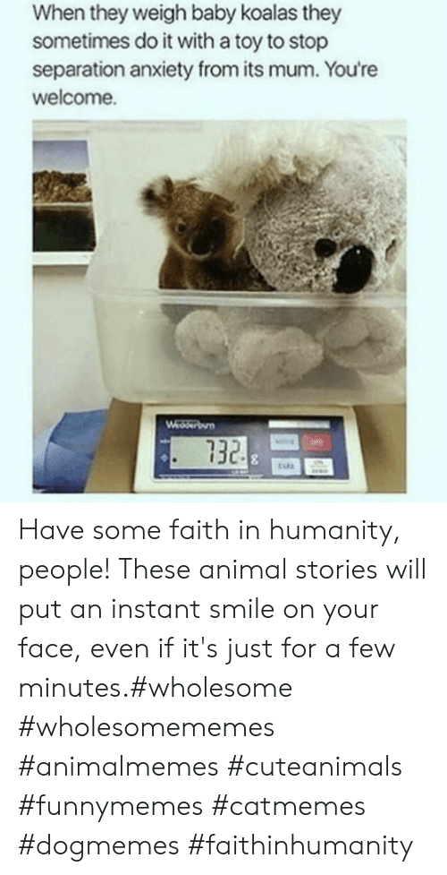 sometimes: When they weigh baby koalas they  sometimes do it with a toy to stop  separation anxiety from its mum. You're  welcome.  Wedserbun  732 Have some faith in humanity, people! These animal stories will put an instant smile on your face, even if it's just for a few minutes.#wholesome #wholesomememes #animalmemes #cuteanimals #funnymemes #catmemes #dogmemes #faithinhumanity