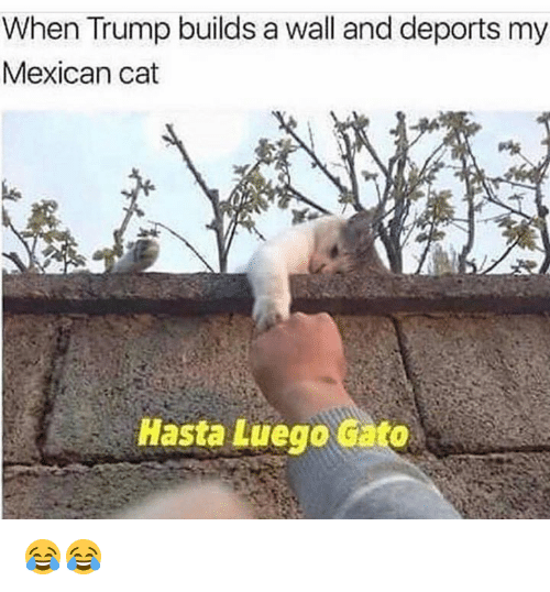 Cato: When Trump builds a wall and deports my  Mexican cat  Hasta Luego cato 😂😂