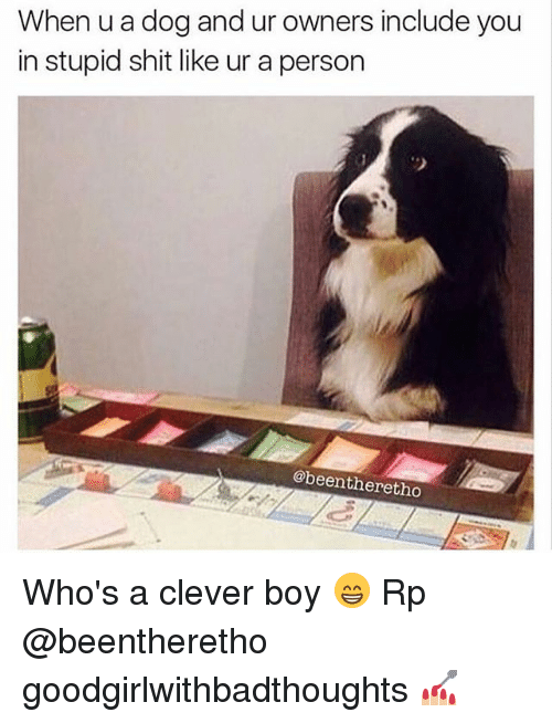 Cleverity: When u a dog and ur owners include you  in stupid shit like ur a person  @beentheretho Who's a clever boy 😁 Rp @beentheretho goodgirlwithbadthoughts 💅🏼