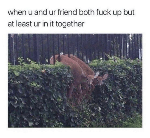Dank, Fuck, and 🤖: when u and ur friend both fuck up but  at least ur in it together