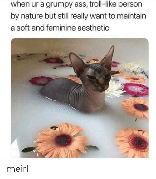 Ass, Troll, and Aesthetic: when ur a grumpy ass, troll-like person  by nature but still really want to maintain  a soft and feminine aesthetic meirl