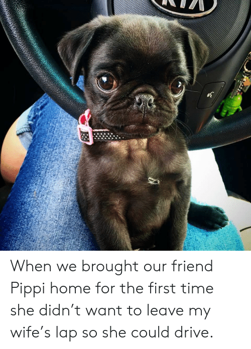 Drive, Home, and Time: When we brought our friend Pippi home for the first time she didn't want to leave my wife's lap so she could drive.