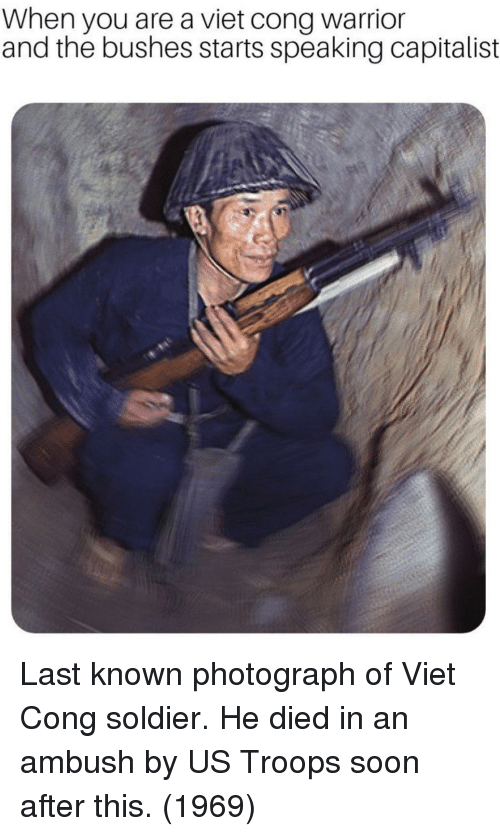 viet cong: When you are a viet cong warrior  and the bushes starts speaking capitalist Last known photograph of Viet Cong soldier. He died in an ambush by US Troops soon after this. (1969)