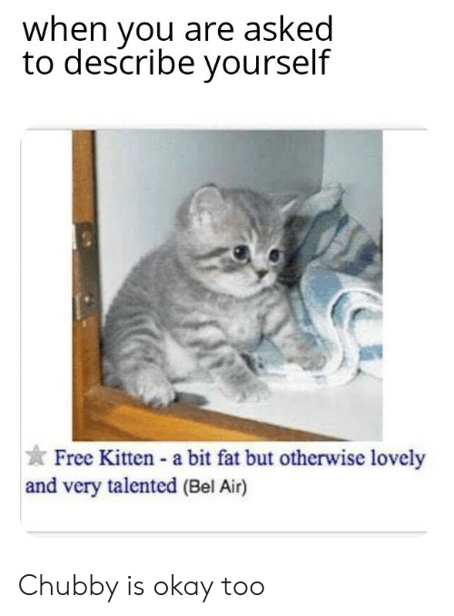 Free, Okay, and Fat: when you are asked  to describe yourself  Free Kitten - a bit fat but otherwise lovely  and very talented (Bel Air) Chubby is okay too