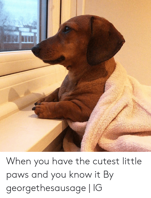 Dank, 🤖, and You: When you have the cutest little paws and you know it  By georgethesausage   IG