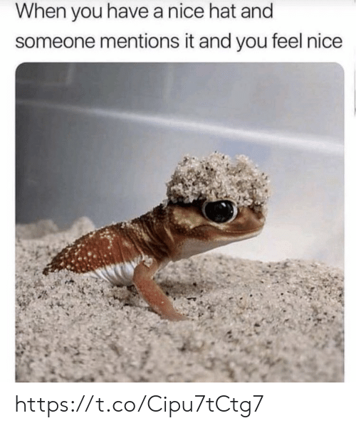 Memes, Nice, and 🤖: When you havea nice hat and  someone mentions it and you feel nice https://t.co/Cipu7tCtg7