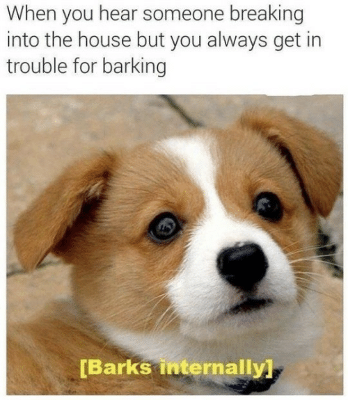 internally: When you hear someone breaking  into the house but you always get in  trouble for barking  [Barks internally