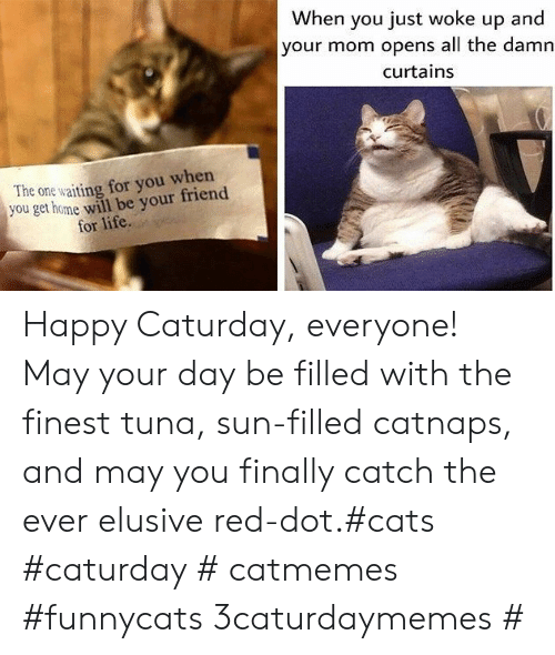 Cats, Caturday, and Life: When you just woke up and  your mom opens all the damn  curtains  The one waiting for you when  you get home will be your friend  for life. Happy Caturday, everyone! May your day be filled with the finest tuna, sun-filled catnaps, and may you finally catch the ever elusive red-dot.#cats #caturday # catmemes #funnycats 3caturdaymemes #