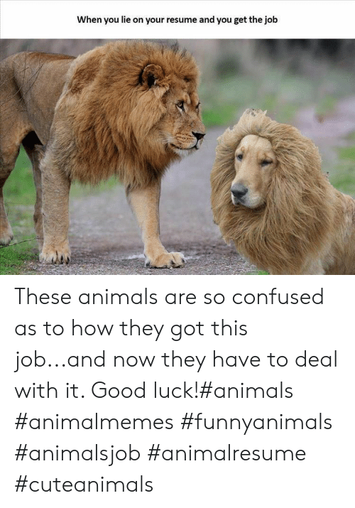 deal with it: When you lie on your resume and you get the job These animals are so confused as to how they got this job...and now they have to deal with it. Good luck!#animals #animalmemes #funnyanimals #animalsjob #animalresume #cuteanimals