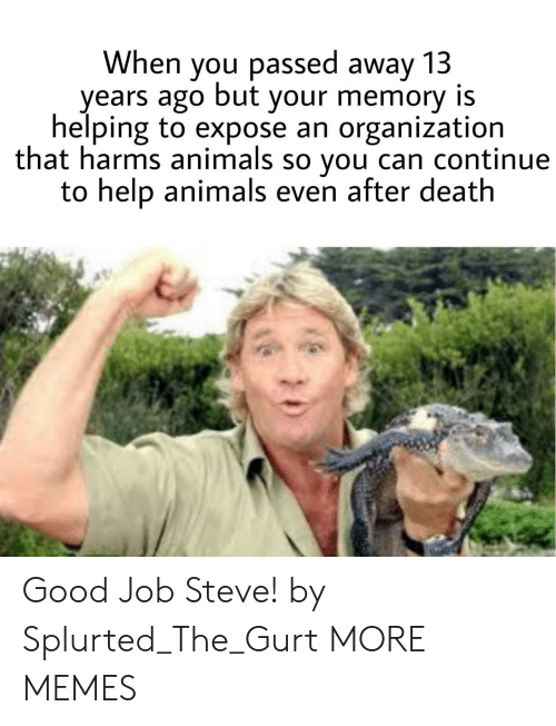 Animals, Dank, and Memes: When you passed away 13  years ago but your memory is  helping to expose an organization  that harms animals so you can continue  to help animals even after death Good Job Steve! by Splurted_The_Gurt MORE MEMES