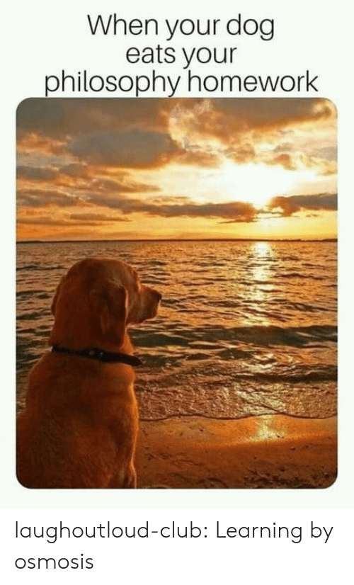 Club, Tumblr, and Blog: When your dog  eats your  philosophy homework laughoutloud-club:  Learning by osmosis