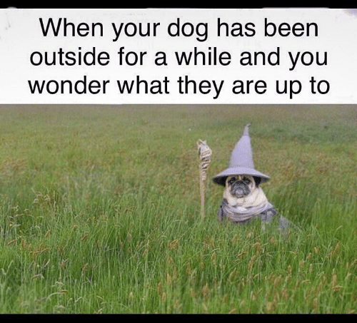 Wonder, Been, and Dog: When your dog has been  outside for a while and you  wonder what they are up to