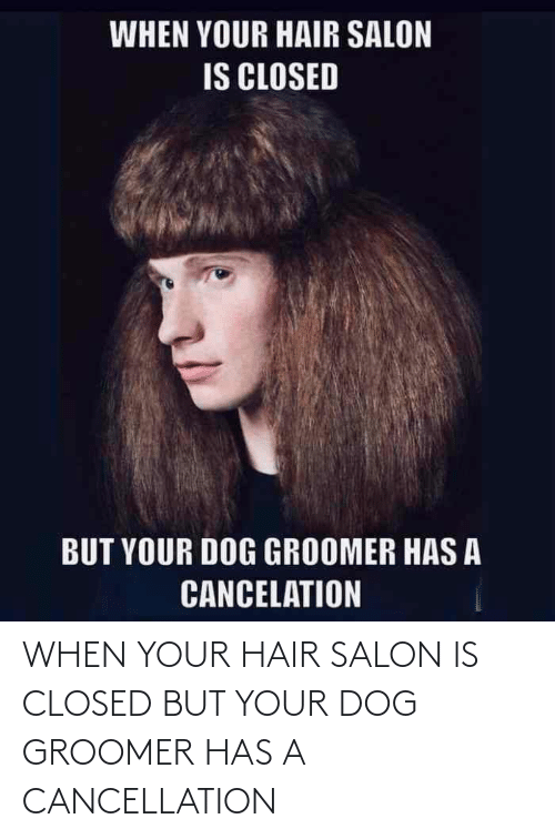 When Your: WHEN YOUR HAIR SALON IS CLOSED BUT YOUR DOG GROOMER HAS A CANCELLATION