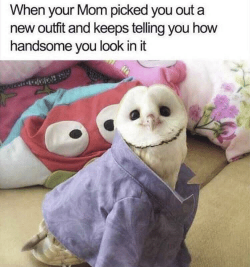 When Your Mom: When your Mom picked you out a  new outfit and keeps telling you how  handsome you look in it