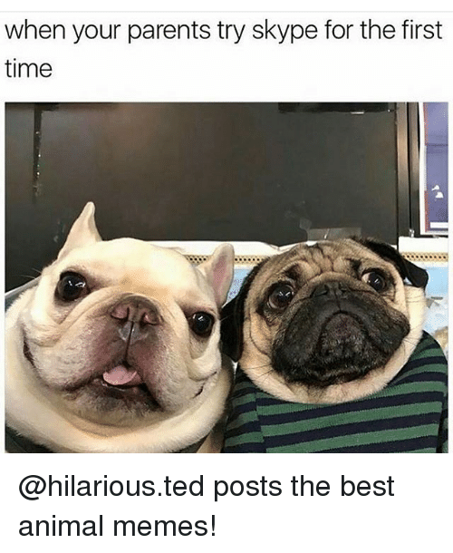 Animation Meme: when your parents try skype for the first  time @hilarious.ted posts the best animal memes!