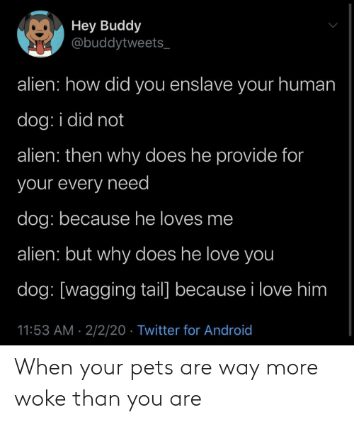 When Your: When your pets are way more woke than you are