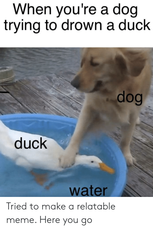 Meme, Duck, and Water: When you're a doq  trying to drown a duck  dog  duck  water Tried to make a relatable meme. Here you go