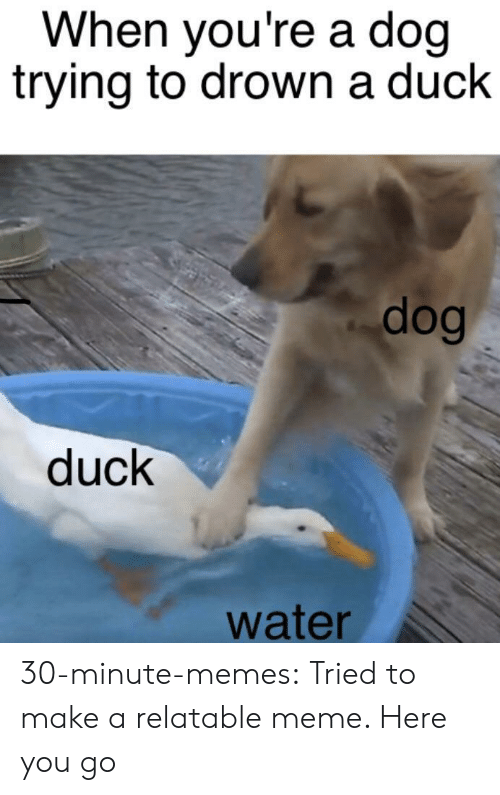 Meme, Memes, and Tumblr: When you're a doq  trying to drown a duck  dog  duck  water 30-minute-memes:  Tried to make a relatable meme. Here you go