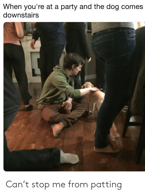 T Stop: When you're at a party and the dog comes  downstairs Can't stop me from patting