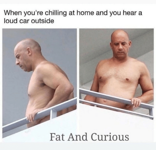 chilling: When you're chilling at home and you hear a  loud car outside  Fat And Curious