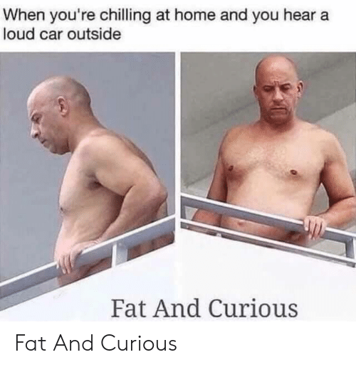 Home, Fat, and Car: When you're chilling at home and you hear a  loud car outside  Fat And Curious Fat And Curious