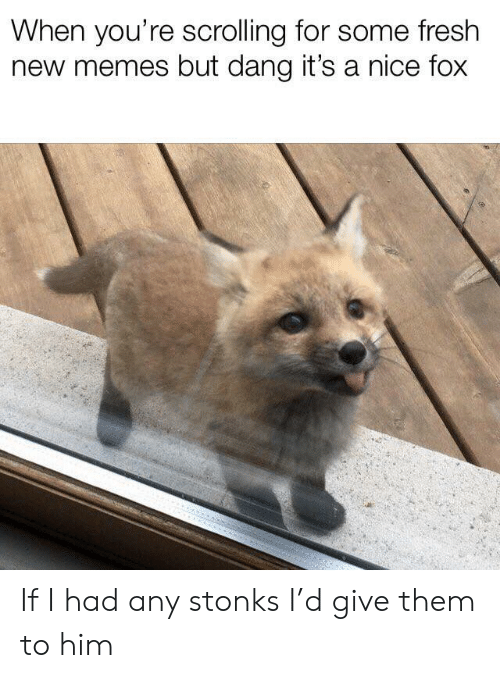 Fresh, Memes, and Nice: When you're scrolling for some fresh  new memes but dang it's a nice fox If I had any stonks I'd give them to him
