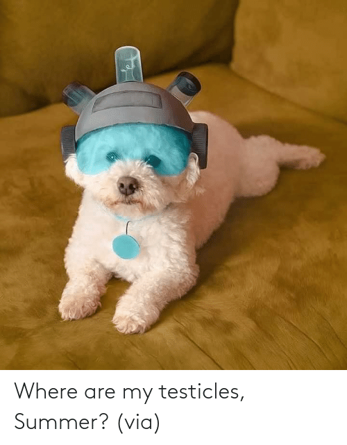 www: Where are my testicles, Summer?(via)