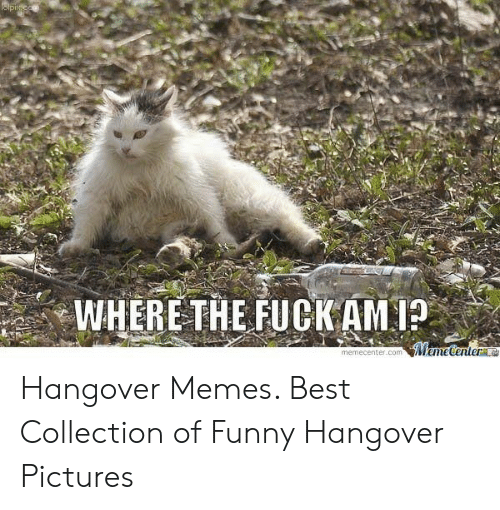 🐣 25+ Best Memes About Funny Hangover Pictures | Funny
